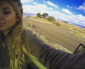 Vamos Bitchachos with lions in Tanzania.