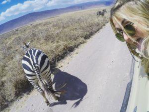 Vamos Bitchachos zebra butt picture in Tanzania.