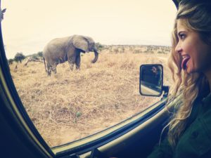 Vamos Bitchachos elephant picture in Tanzania.