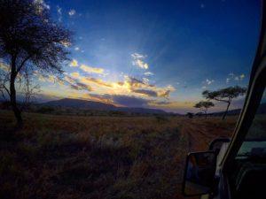 Vamos Bitchachos Tanzania safari sunset picture in jungle.