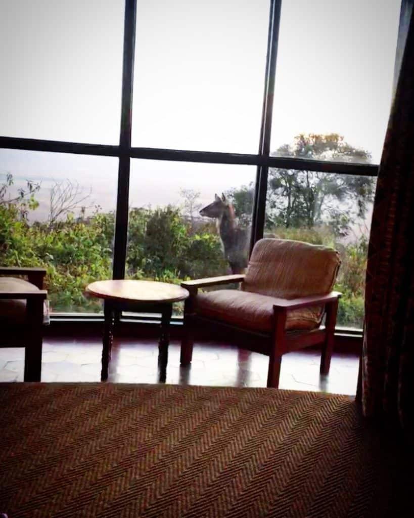Vamos Bitchachos Ngorongoro hotel view of animal in Tanzania.