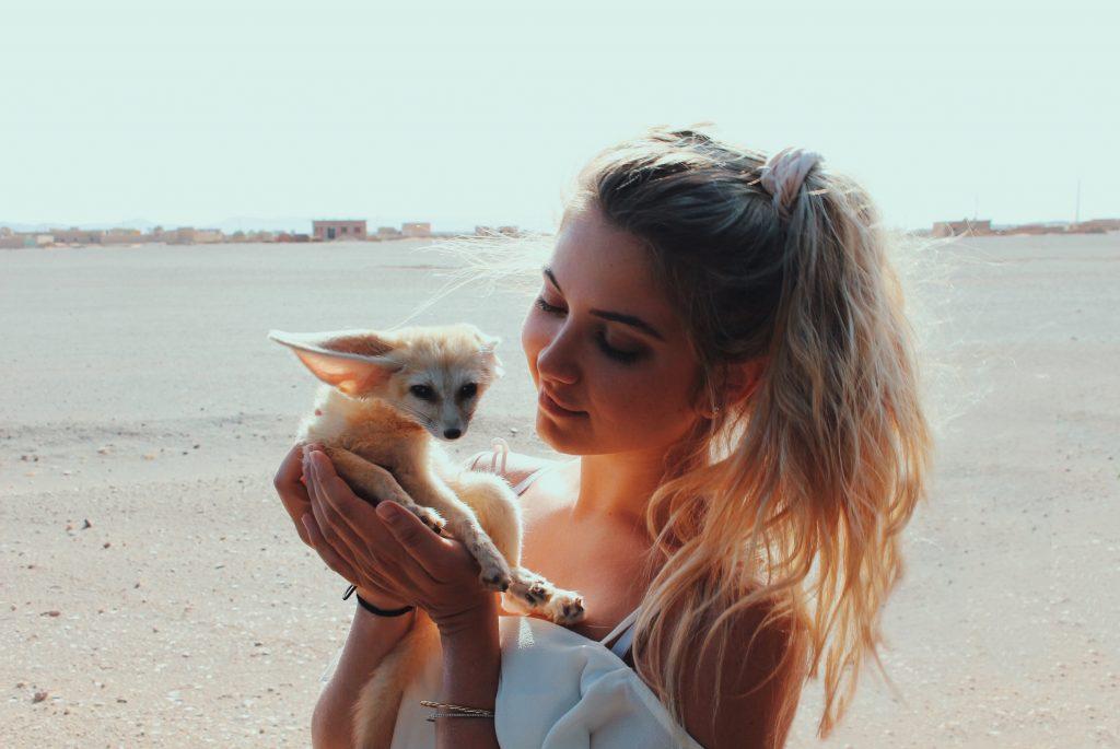 Sahara fennec fox