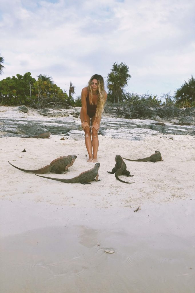 Bahamas Iguanas Exuma Cays Vamos Bitchachos